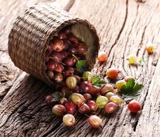 Free Gooseberries Have Dropped From The Basket Royalty Free Stock Images - 25960199