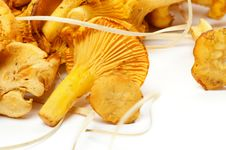 Free Fresh Raw Chanterelle Mushrooms Stock Photos - 25962483