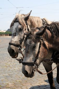 Free Carriage Horses Royalty Free Stock Photos - 25965178