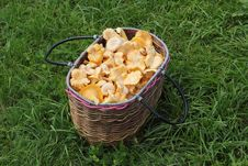 Basket With A Mushrooms Royalty Free Stock Images