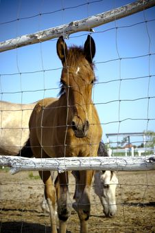 Free Horse Stock Images - 25967514