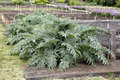 Free Big Artichoke Leaves Stock Images - 25971944