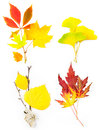 Free Composition Set Of Beautiful Autumn Leaves Royalty Free Stock Photos - 25973088