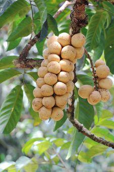 Free Longan Thai Fruit Stock Photography - 25974972