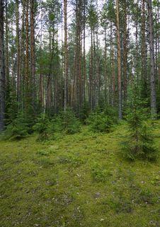 Free Northern Wood. Stock Photos - 25978933