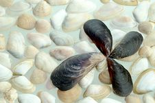 Free Seashell Stock Photo - 25984890