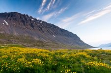 Free Mountain And Meadow Of Yellow Flowers Royalty Free Stock Image - 25986116