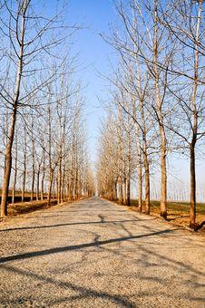 Free Road Royalty Free Stock Photo - 25990225