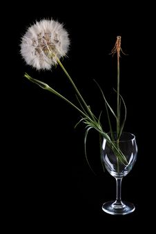 Free Dandelion Stock Images - 25993624