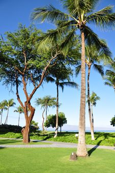 Free Palm Trees And Condos, Maui Stock Image - 25997781