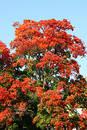 Free Autumn Blushing Trees Royalty Free Stock Images - 260459