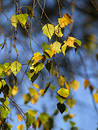 Free Autumn [21] Royalty Free Stock Images - 261809