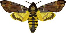 Free Acherontia Atropos Stock Image - 260011
