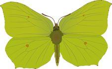 Free Gonepteryx Rhamni Royalty Free Stock Photo - 260015