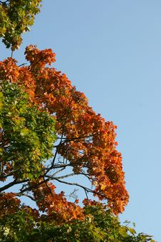 Free Autumn Leaves Stock Image - 260461