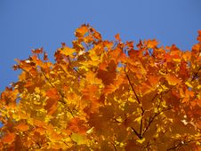 Free Autumn [5] Stock Photography - 261762
