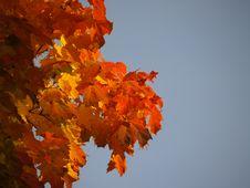 Free Autumn [6] Stock Photos - 261763