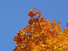 Free Autumn [7] Stock Images - 261764