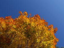 Free Autumn [9] Royalty Free Stock Image - 261766