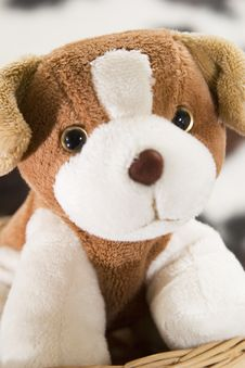 Free Puppy Toy Royalty Free Stock Photo - 261775