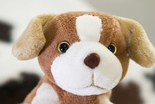 Free Puppy Toy Royalty Free Stock Photography - 261777