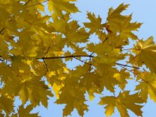 Autumn [12] Stock Images