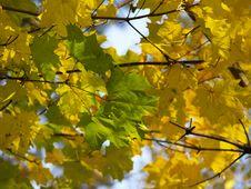 Free Autumn [16] Royalty Free Stock Photos - 261788