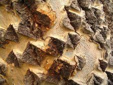 Free Tree Trunk Macro Royalty Free Stock Photos - 261938