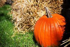 Free Pumpkin Royalty Free Stock Photography - 262697