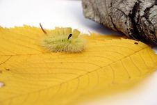 Free Furry Caterpillar Stock Photography - 262962