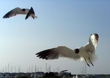 Free Seagulls Following Boat Stock Image - 263491