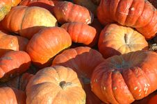 Free Lots Of Pumpkins Royalty Free Stock Photos - 263608