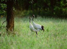 Free Birds Stock Photography - 265152
