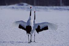 Free Birds Stock Photo - 265190