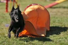 Free Belgian Shepherd Out Of Tunnel Stock Photo - 265520