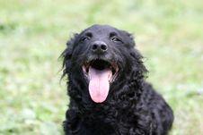 Free Croatian Shepherd Showing Tongue Stock Photography - 265562