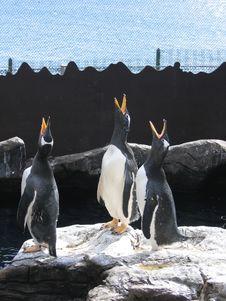 Free Pinguïns_Seafront Stock Photos - 266543