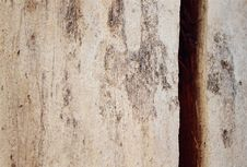 Free Abstract Tree Crack Royalty Free Stock Image - 267576
