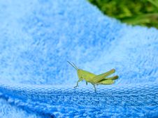 Free Grasshopper 1 Stock Images - 267874