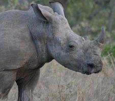 Free Rhino Stock Images - 269964