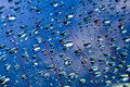 Free Water Droplets In Blue Surface Stock Image - 2601651