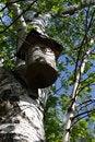 Free Nesting Box Stock Images - 2605044