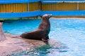 Free Sea Lion King Royalty Free Stock Photo - 2607215