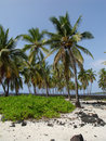 Free Palm Grove Place Of Refuge Stock Image - 2607551