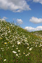 Free Hillside Of Wild Flowers Royalty Free Stock Images - 2608679