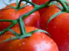 Free Tomato Stock Photography - 2600022