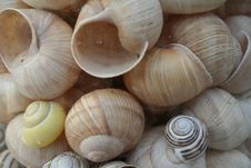 Free Snail Shell Royalty Free Stock Image - 2600296