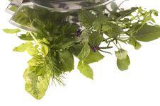 Chopping Fresh Herbs. Stock Photo