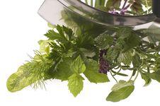 Chopping Fresh Herbs. Stock Photos