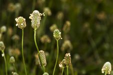 Background With Small Flowers Royalty Free Stock Images